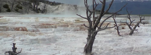 Mammoth Hot Springs - Yellowstone Nationalpark